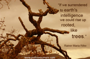 "... , we could rise up rooted like trees."" Rainer Maria Rilke"