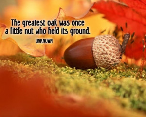 The greatest oak was once a little nut who held its ground.