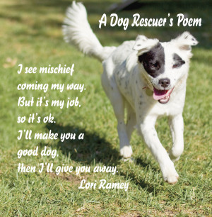Rescued Dogs Quotes Rescue dogs quotes a dog rescuer's poem
