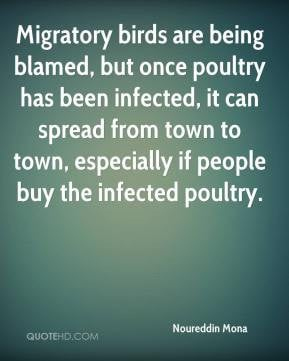 Migratory birds are being blamed, but once poultry has been infected ...