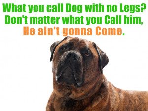 Funny pictures: Dog quotes, famous dog quotes, best dog quotes