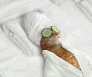 ... funny photos of pets in SPA , I am sure they will make you chuckle