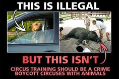 Animal Abuse & Rights