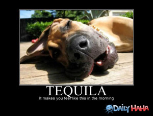Ugh_Tequila_funny_picture