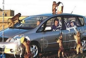 funny.desivalley.com/car-wash-funny-monkey-picture/][img]http://funny ...