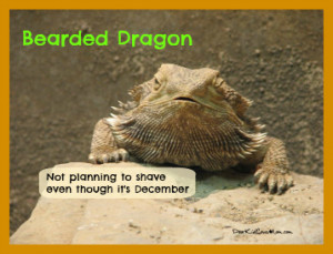 Bearded Dragon Not planning to shave even though it 39 s December