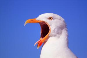 jonathan-livingston-seagull-quotes1.jpg