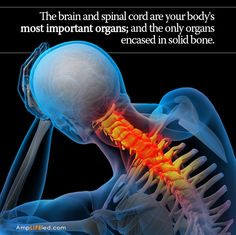 The brain controls every function of your body. The spine can ...