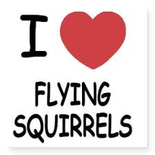 FLYINGSQUIRRELS Square Sticker 3