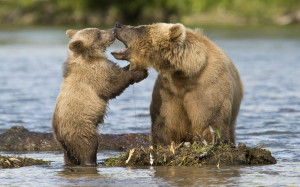 "Momma bear teaching baby bear about a first bath. ""Never say ..."