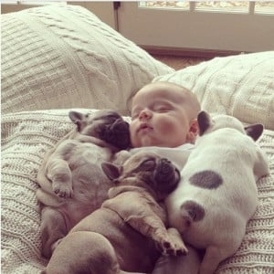 baby sleeping with puppies