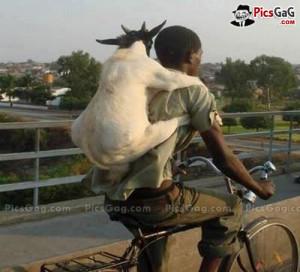Goat Boy Funny Travel