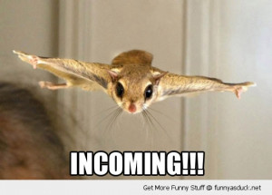 incoming flying squirrel animal funny pics pictures pic picture image ...