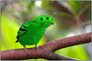 The Colorful World Birds