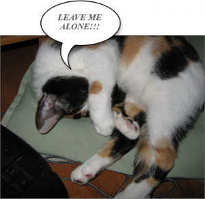 Funny Cat - Leave Me Alone!!!