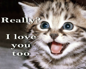 ... meme quote funny humor grumpy kitten mood love wallpaper background