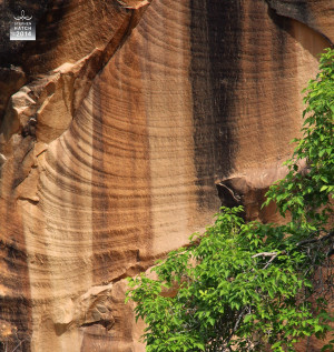 The varnish forms when rainwater dissolves manganese in the rock and ...