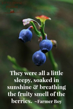 ... quote from Farmer Boy. Blueberries = summer! #summer #blueberry #quote