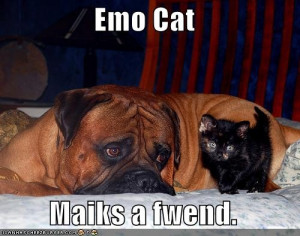 Downsized Image [funny-pictures-emo-cat-emo-dog-friends.jpg - 37kB]