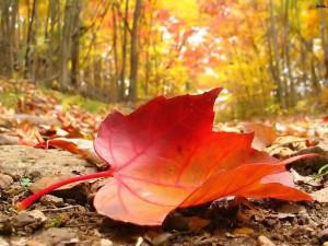 autumn season hd wallpaper autumn season hd wallpaper autumn season hd ...