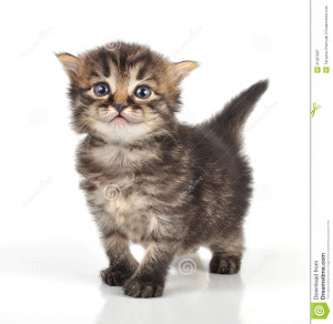Beautiful cute 20 days old small kitten standing.