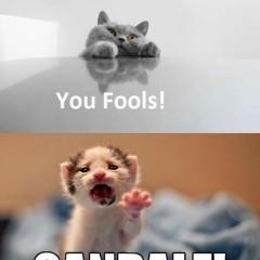 Cannot Brain Today Cat Meme