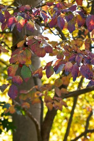 Joe Eck & Wayne Winterrowd in Living Seasonally: The Kitchen Garden ...