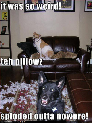 dog Mischief photo: Sploded funny-dog-pictures-mischief-dogs-te.jpg
