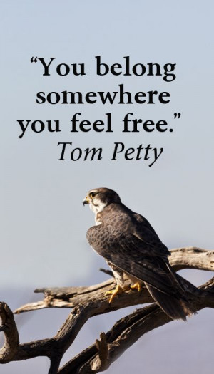 """You belong somewhere you feel free."""" Tom Petty – On image of ..."""