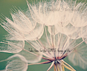 - nature photography, flower portrait, teal and cream, famous quotes ...