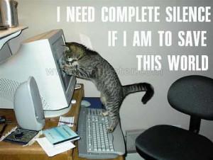 Funny Cat - cats Photo