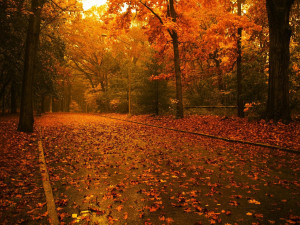 wallpaper image description for fall leaves falling wallpaper fall ...