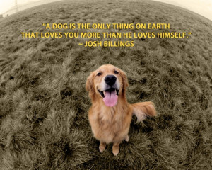 Golden Retriever Quotes And Sayings