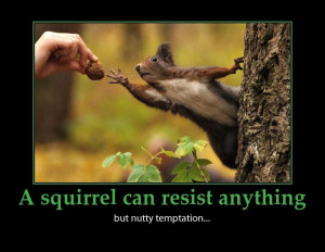 squirrel nutty temptation quote funnyPhotos, Food Pictures, God, News ...