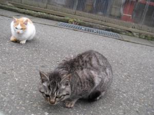 Stray Cat Stray cats of japan