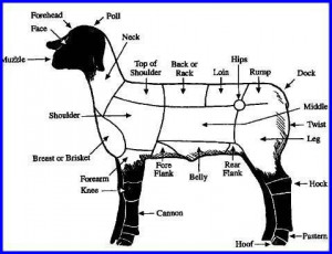 parts of a lamb: Lambs Ffa, Sheep 4H, Black Sheep, Sheep Body
