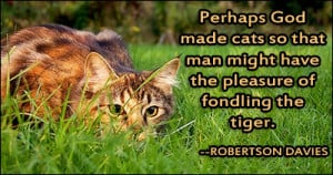 Tiger Quotes And Sayings Of fondling the tiger.