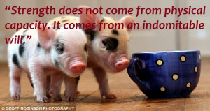 What are Teacup Pigs or Micro Pigs ?
