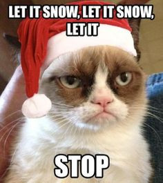 grumpy cat christmas pics | Let it snow | Grumpy Cat Christmas.... YES ...