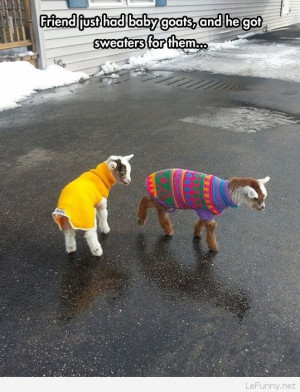 Funny baby goats picture