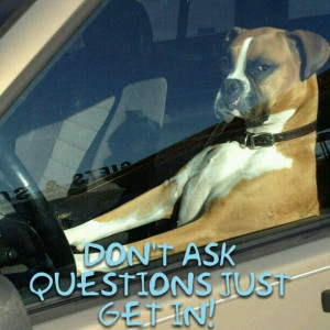 Boxer Dogs Humor