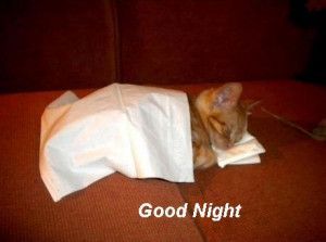 .com/pictures/funny-animal-pictures/funny-cat-pictures/good-night ...