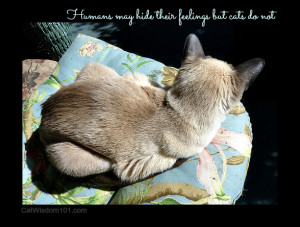 CAT QUOTES DEATH image gallery