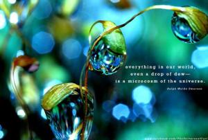 quote-drop of dew macrocosm