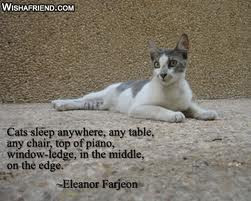 The ideal of calm exists in a sitting cat.