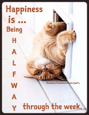 ... Cats, Gingers Cats, Silly Cats, Funnies Cats, Cats Doors, Cats Quotes