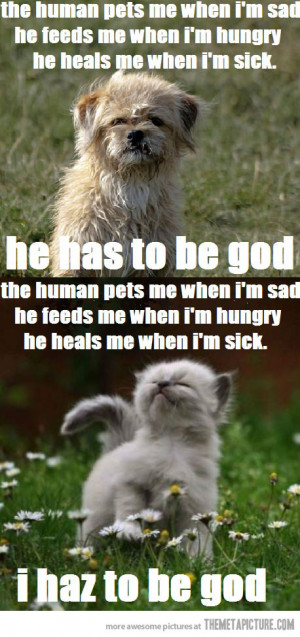 and cat quotes funny cats vs dogs cat vs dog cats and dog have