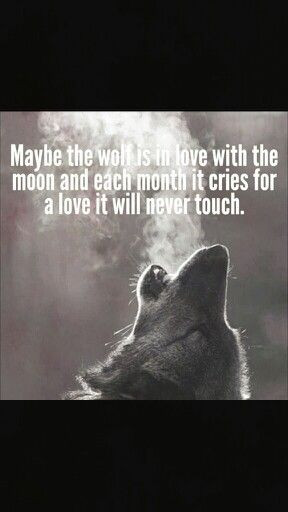 Wolf quotes》Moon quotes