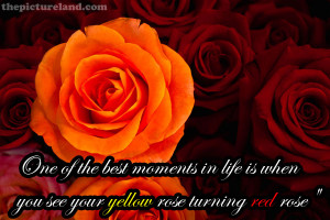 Beautiful Love Quote Sayings With Roses Pictures