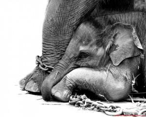 Circus Animal Cruelty Quotes